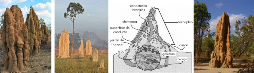 Arquitectura_termitas_01